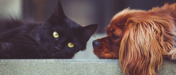 Hunde und Katzen unsere beliebtesten Haustiere.e