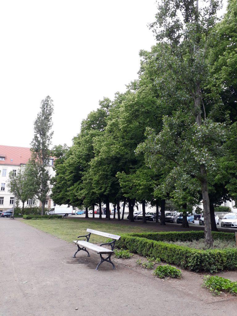 Parkbank und Bäume auf dem Richterplatz